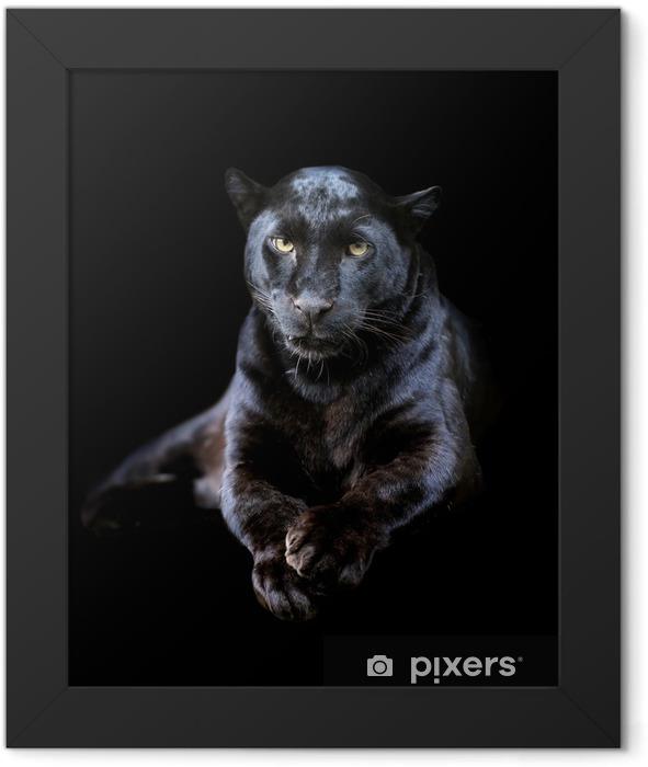 Black leopard Framed Poster - Mammals