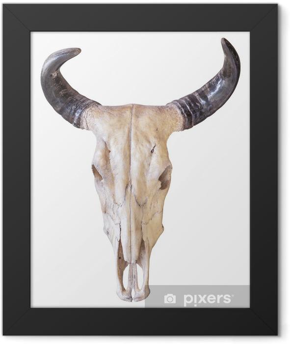 Buffalo skull isolated on white background Framed Poster - Mammals