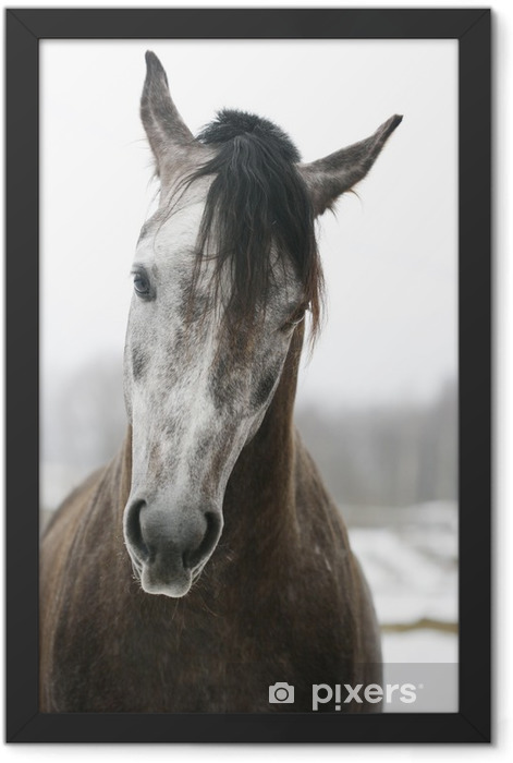 arabian stallion Framed Poster - Themes