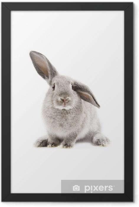 Rabbit Framed Poster - Rabbits