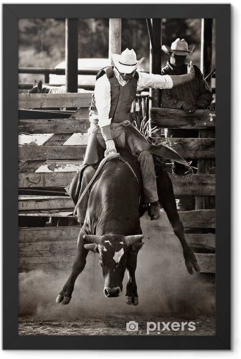 rodeo cowboy bull riding - converted with added grain Framed Poster - America