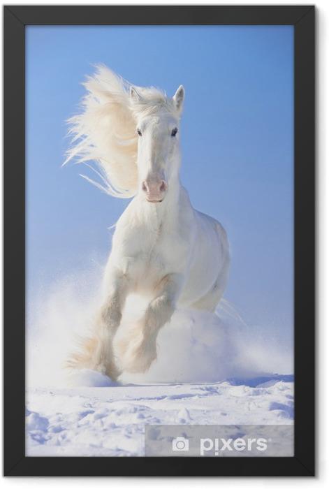 Plakat w ramie Biały koń biegnie galop ogier w przedniej naciskiem - Tematy