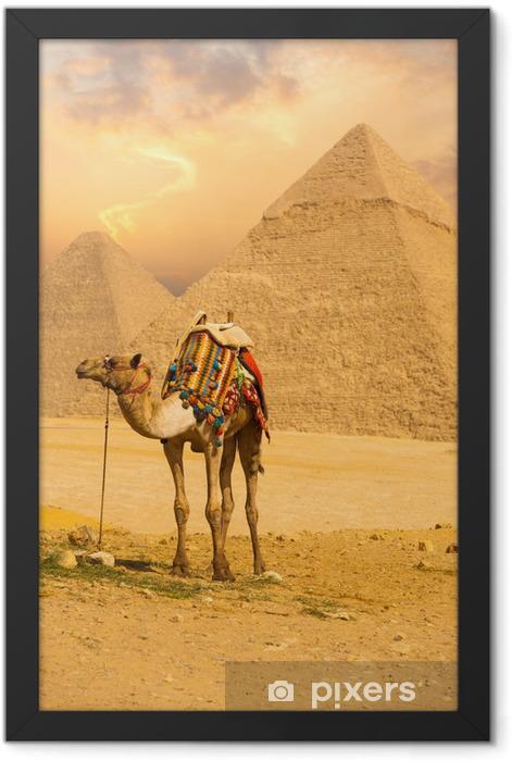 Tied Camel Standing Front Pyramids V Framed Poster - Africa