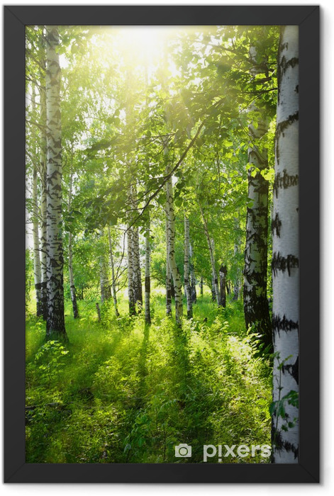 summer birch woods with sun Framed Poster - Destinations