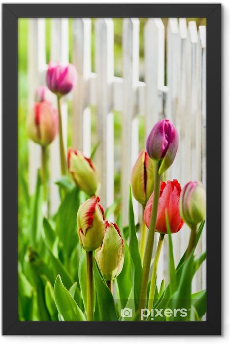 Plakat w ramie Tulipany w ogrodzie - Tematy