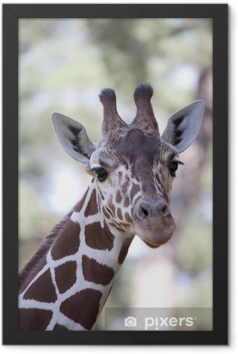 Giraffe Framed Poster - Themes