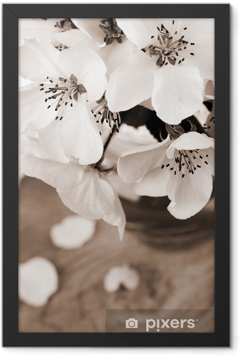 Flower of apple tree, processed in vintage sepia color Framed Poster - Apple trees