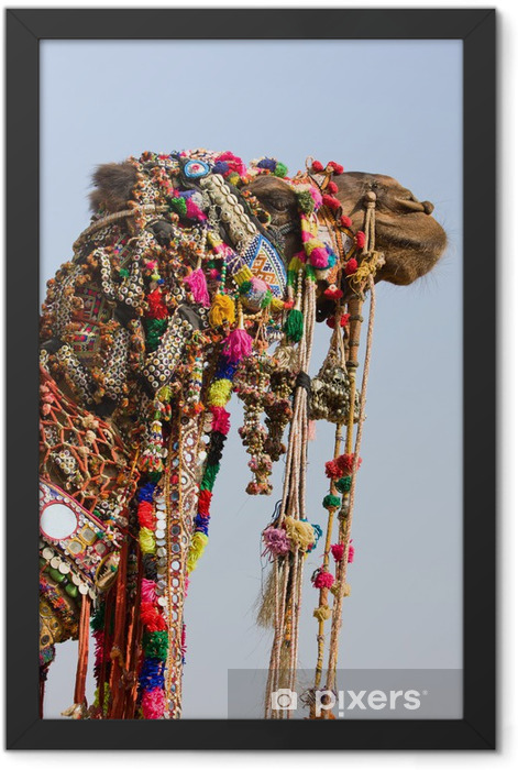 Camel at the Pushkar Fair in Rajasthan, India Framed Poster - Asia