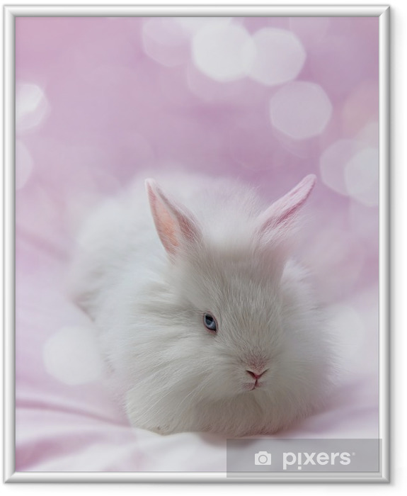 little white rabbit and pink background Framed Picture - Mammals