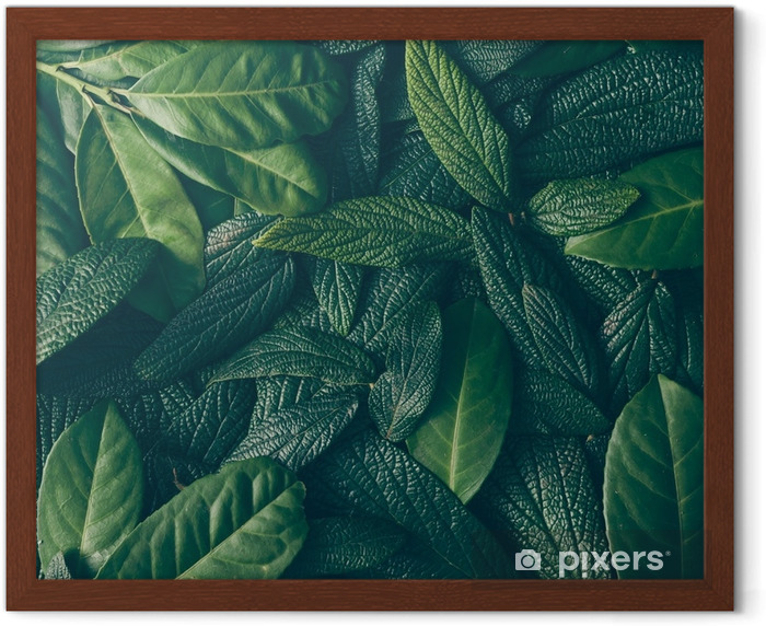 Creative layout made of green leaves. Flat lay. Nature concept Framed Poster - Plants and Flowers