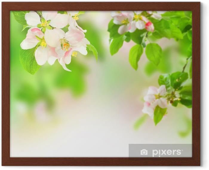 Apple Blossom Framed Poster - Apple trees