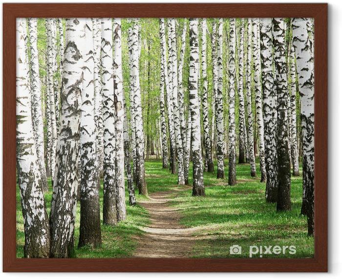 Spring in birch grove Framed Poster - Destinations