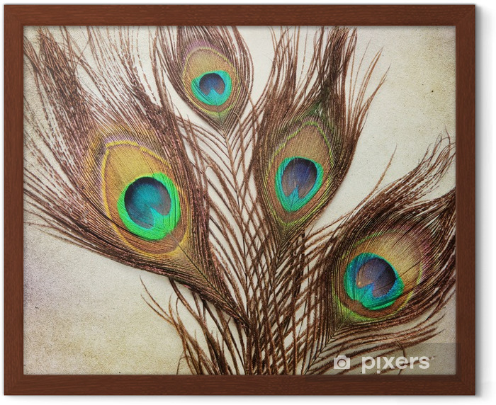 Vintage background with peacock feathers Framed Poster - Textures