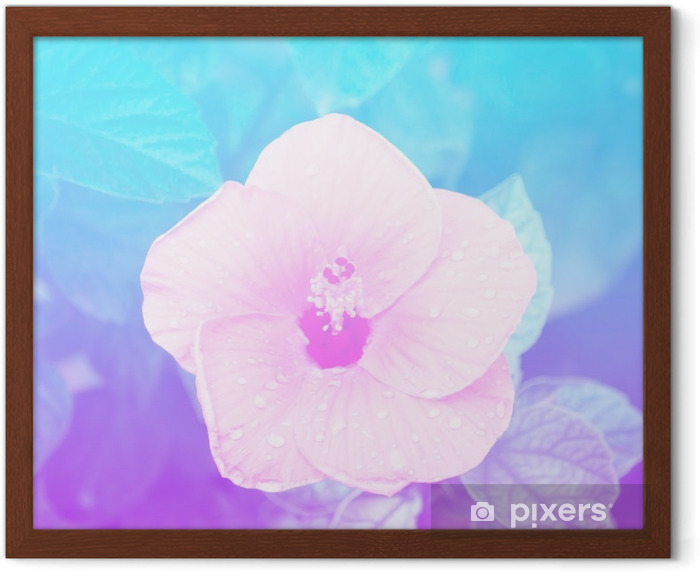 Flowers in pastel styles. Framed Poster - Plants and Flowers