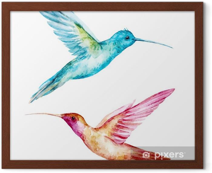 Ingelijste Poster Watercolor colibri bird - Dieren