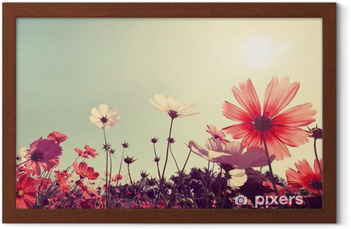 Plakat w ramie Archiwalne krajobrazu przyrody tle Piękny kwiat Cosmos polu na niebo z promieni słonecznych. Kolor retro efekt filtra tonu - Rośliny i kwiaty