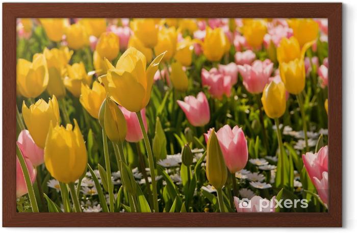 Gerahmtes Poster Tulpe - Themen