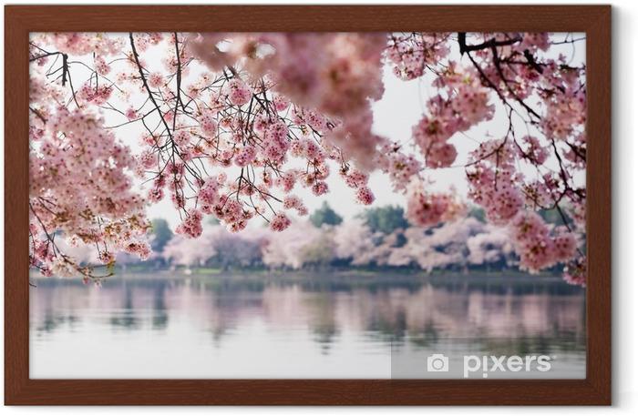 Ingelijste Poster Cherry Blossoms dan Tidal Basin in Washington DC - Thema's