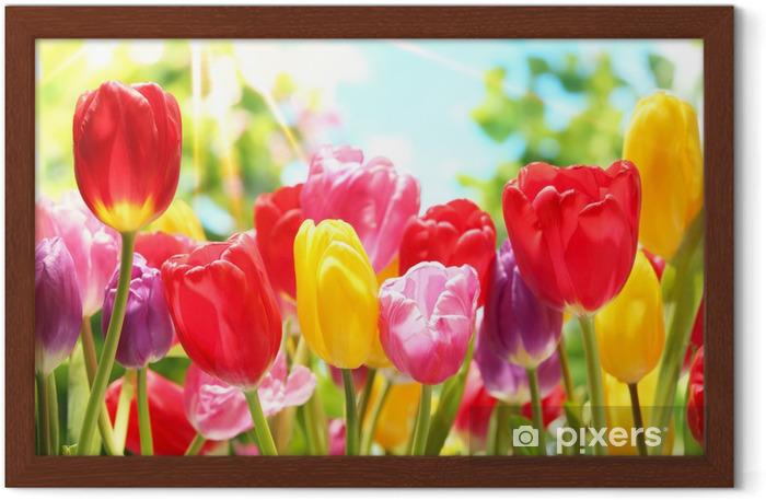 Gerahmtes Poster Frische Tulpen in warmen Sonnenlicht - Themen
