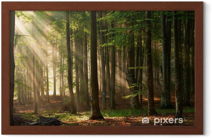 Plakat w ramie Promyki słońca przebijają się przez las - Tematy