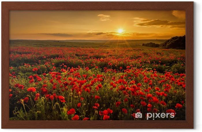 Ingelijste Poster Veld met klaprozen tijdens zonsondergang - Weiden, velden en gras