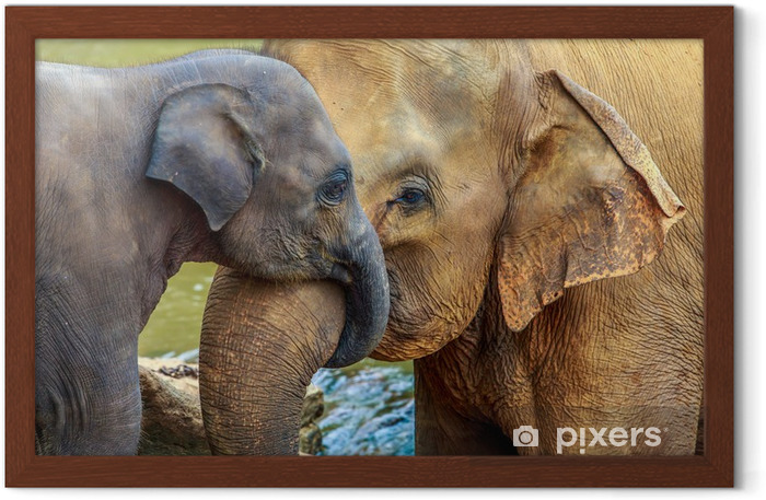 elephant and baby elephant Framed Poster - Mammals