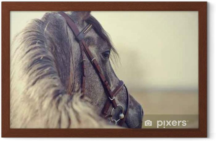 Portrait of a sports stallion Framed Poster - Animals