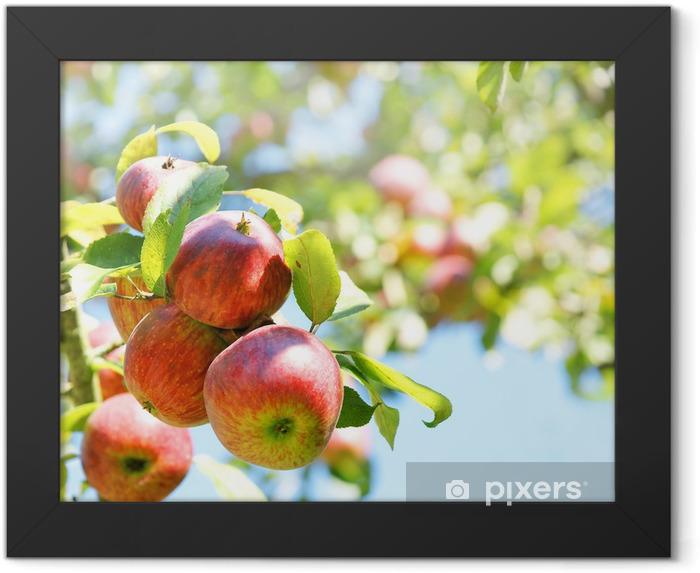 Apple tree Framed Poster - Fruit
