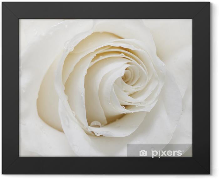 Plakat w ramie Biała róża - iStaging