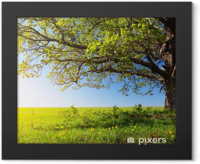 Plakat w ramie Majestatyczne drzewo - Przeznaczenia