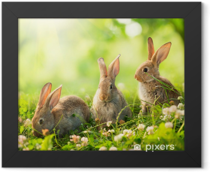 Rabbits. Art Design of Cute Little Easter Bunnies in the Meadow. Framed Poster - Rabbits