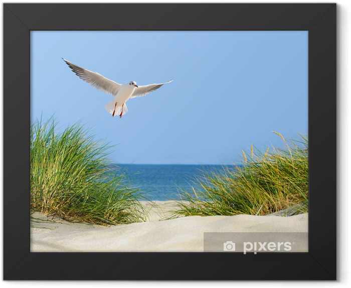 Düne, Möwe und Meerblick Framed Poster - Sea and ocean
