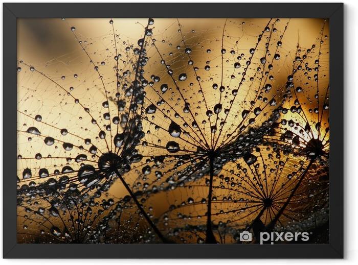 Dew drops on dandelions Framed Poster -