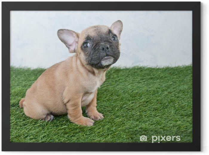 French Bulldog Puppy Framed Poster - French bulldogs