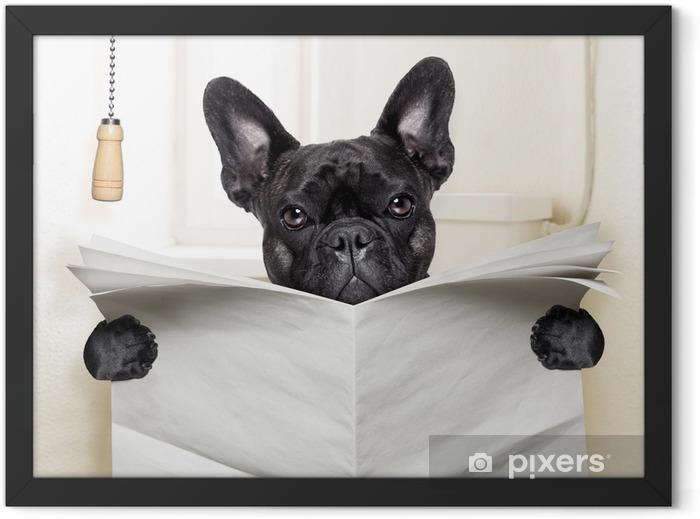 Poster en cadre Toilette de chien - Bouledogues français