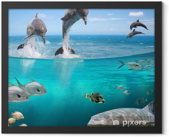 Plakat w ramie AQUA ŻYCIE - Rekiny