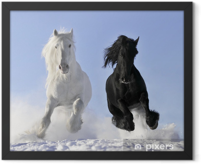 Plakat w ramie Biały i czarny koń - Przeznaczenia