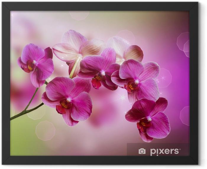 Orchid Framed Poster -
