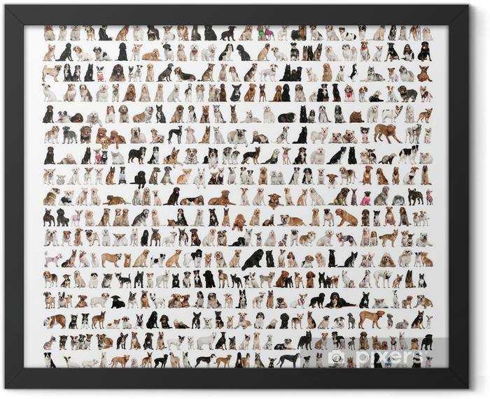 Poster en cadre Grand groupe des races de chien devant un fond blanc - Mammifères
