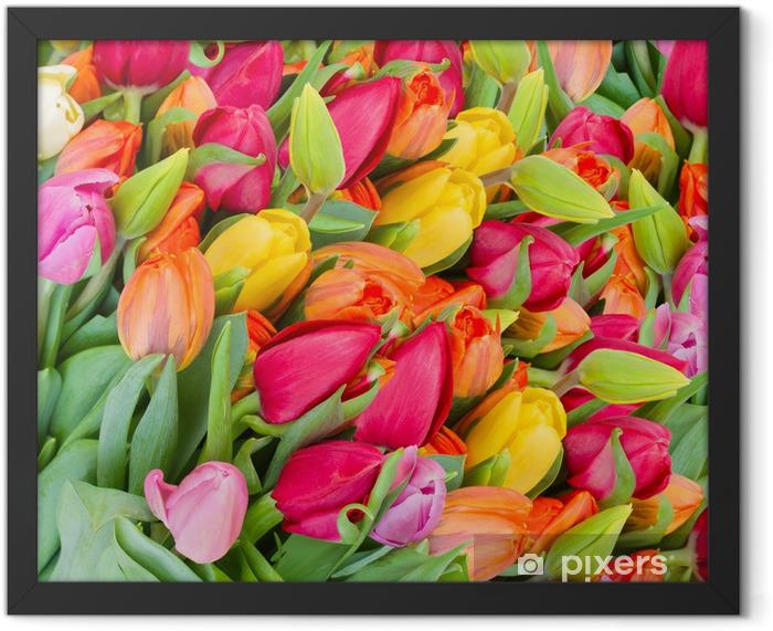 Plakat w ramie Tło z wiosennych tulipanów - Tematy