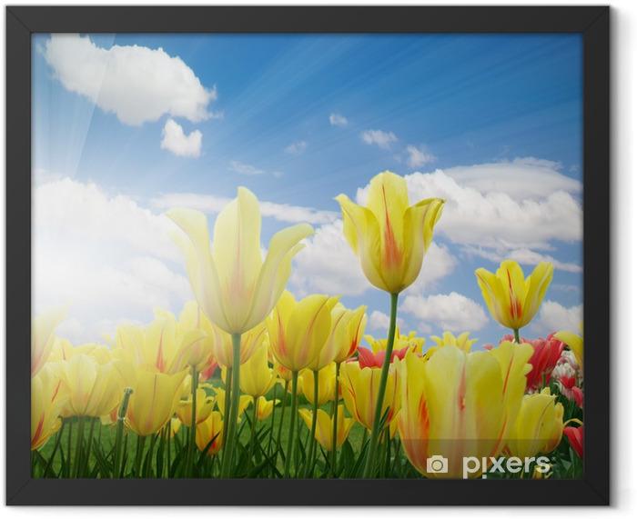 Plakat w ramie Pola tulipanów - Tematy