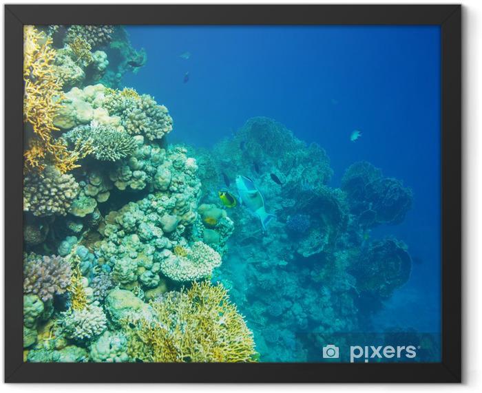 Coral reef Framed Poster - Coral reef