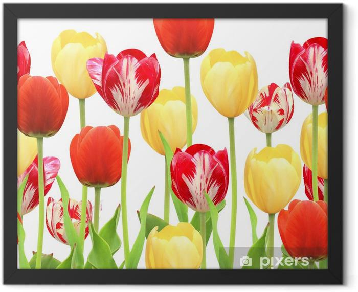 Plakat w ramie Bez szwu granicy z tulipanów - Tematy