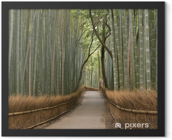 Kyoto Bamboo grove Framed Poster - Bamboos