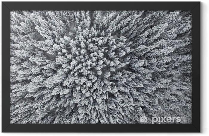 Ingelijste Poster Bevroren Pine Forest uit de lucht - Landschappen