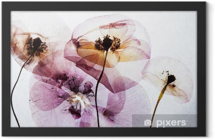 Plakat w ramie Suche maki - Rośliny i kwiaty