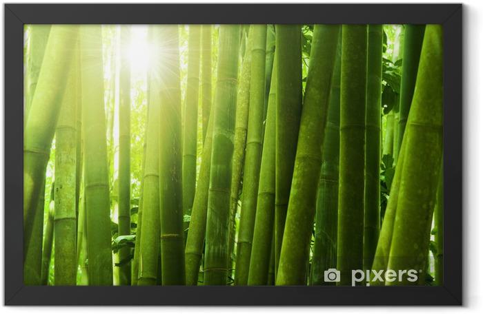 Poster en cadre Bambou foret - Thèmes