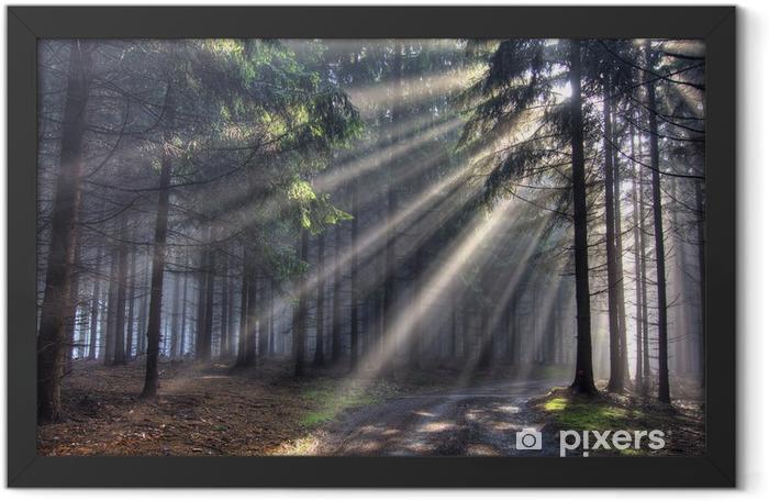 god beams - coniferous forest in fog Framed Poster - Forests