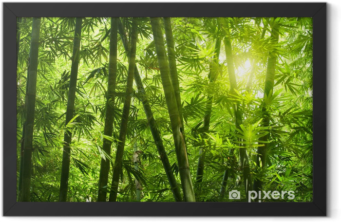 Bamboo forest. Framed Poster - Themes