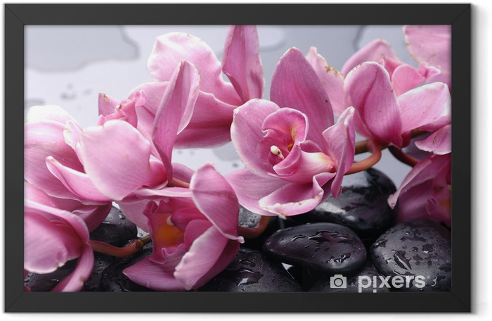 Set of cattleya orchid flower and stone with water drops Framed Poster - Themes